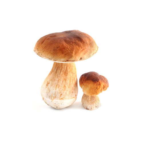 Porcini mushrooms
